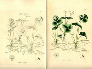 JACOB BIGELOW'S AMERICAN MEDICAL BOTANY, 1817-1821.